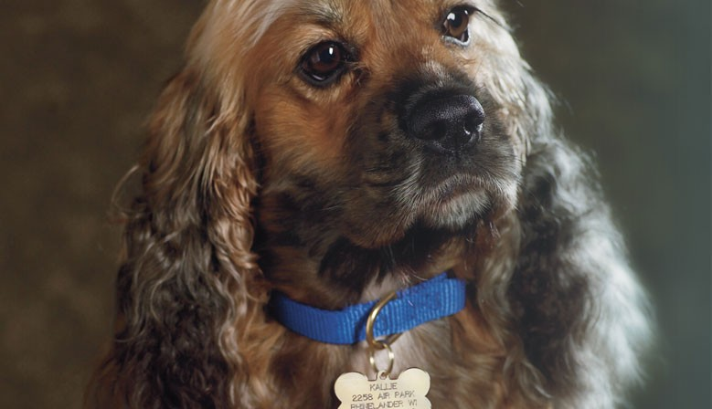 Laser engraved Pet ID Tags